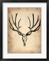 Framed Vintage Deer Scull