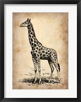 Framed Vintage Giraffe