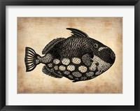 Framed Vintage Fish