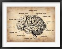 Framed Vintage Brain Map Anatomy