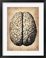 Framed Vintage Brain