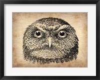 Framed Vintage Owl Face