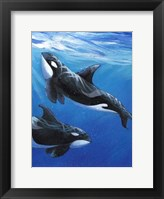 Under Sea Whales II Framed Print