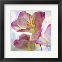 Framed Pink Hyacinth I