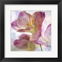 Framed Pink Hyacinth I