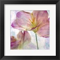 Framed Pink Hyacinth II