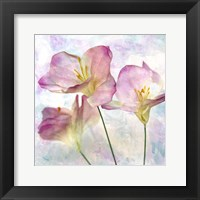 Framed Pink Hyacinth III