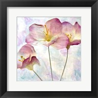Framed Pink Hyacinth IV