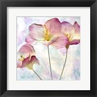 Framed Pink Hyacinth IV