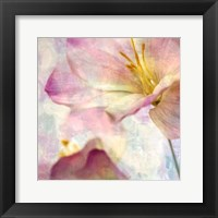 Framed Pink Hyacinth V