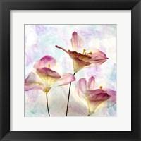 Framed Pink Hyacinth VI