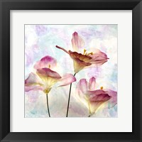 Framed Pink Hyacinth VI