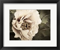 Golden Era Peony I Framed Print