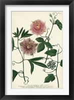 Framed Antique Passion Flower I
