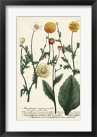 Framed Saffron Garden II