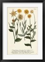 Framed Saffron Garden III