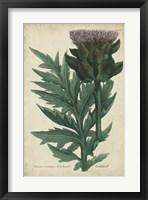 Framed Weinmann Foliage & Fruit II