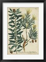 Framed Weinmann Foliage & Fruit IV