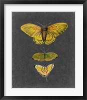 Butterflies on Slate I Framed Print