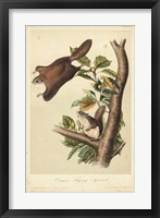 Framed Audubon Squirrel IV