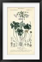 Framed Botanique Study in Lavender I