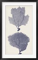 Indigo Seafans I Framed Print