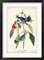 Framed Cerulean Wood Warbler