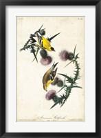 Framed American Goldfinch