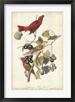 Framed Summer Red Bird