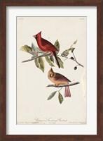 Framed Common Cardinal Grosbeak