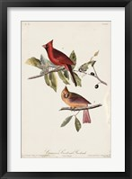 Framed Common Cardinal Grosbeak