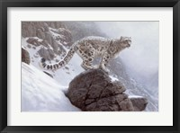 Winter's Veil Framed Print