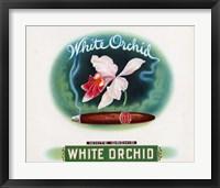 Framed White Orchid