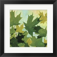 Framed Summer Leaves