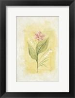 Pink Bloom 2 Framed Print