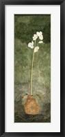 White Potted Flower Framed Print