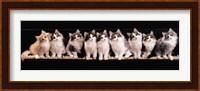Framed Klassical Kittens