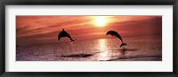 Framed Sunset Dolphins