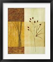 Wheat II Framed Print