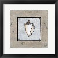Sea Shell on Blue II Framed Print