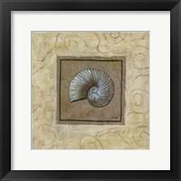 Sea Shell II Framed Print