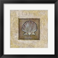 Framed Sea Shell I