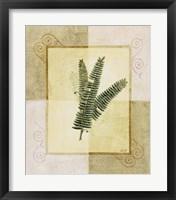 Ferns I Framed Print