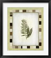 Fern I Framed Print
