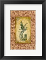 Framed Decorative Ferns I