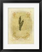 Fern Delight II Framed Print