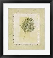Green Splendor I Framed Print