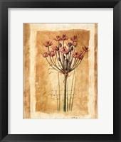 Botanical IV Framed Print