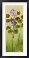 Wild Flowers II Framed Print