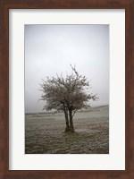 Framed Cedar Tree